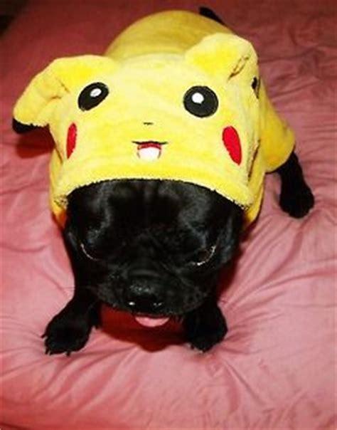 baby pug costume pika pug awww plump puppy pug puggie pug