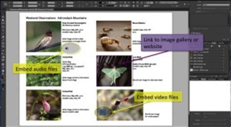 Creating Interactive Pdfs Using Adobe Indesign Techademia Interactive Pdf Templates Indesign