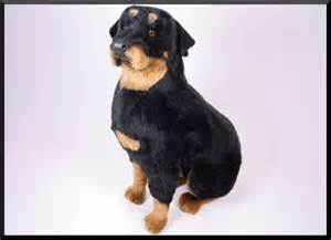 rottweiler stuff alf img showing gt real stuffed dogs