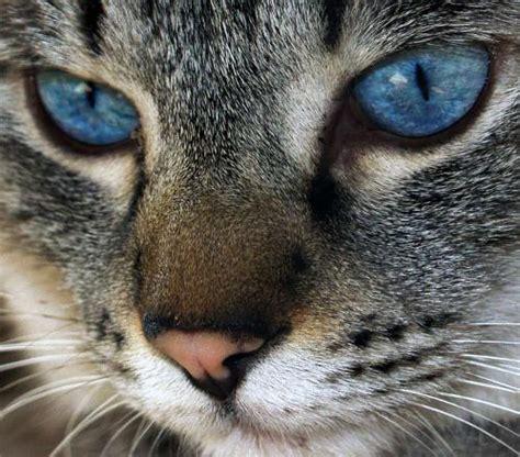imagenes artisticas de gatos gatos ojos miradas colores en fotos
