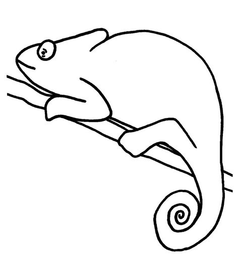 Chameleon Template chameleon coloring pages to printable