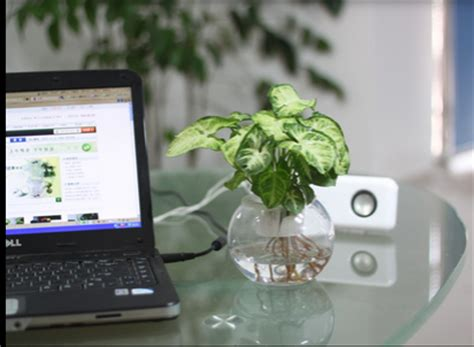 feng shui plants for office desk good place to place feng shui plant in office room feng