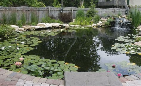 large backyard ponds triyae com natural garden pond maintenance various design inspiration for backyard