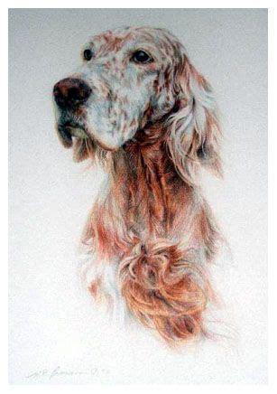 morgan setter dog pinterest the world s catalog of ideas