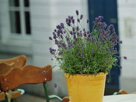 jenis tanaman hias  taman kecil  rumah