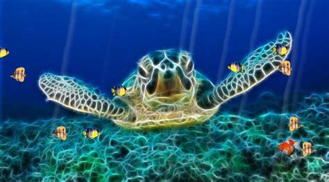 underwater themes for windows 10 animated ocean desktop wallpaper wallpapersafari