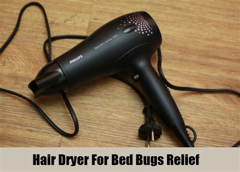 does the dryer kill bed bugs 8 home remedies for bed bugs natural treatments cure