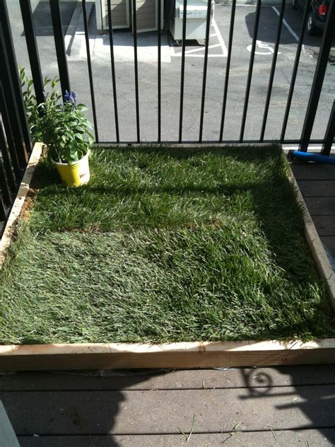 patio grass for dogs super dog charlie pants and me dog potty for patio build