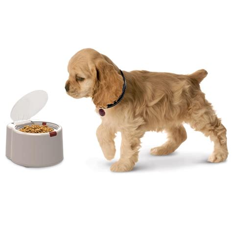 Gadgets For Pets Microchip Activated Feeder Opens When Your Pet Approaches