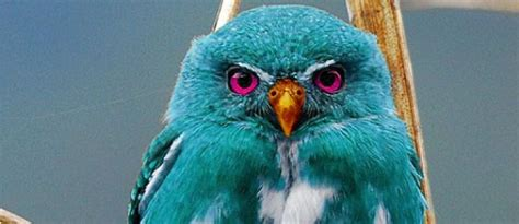 Piyama Owl Blue Piyama Owl teal owl