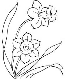 picturs to color daffodil coloring pages coloring home