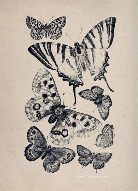butterfly tattoo halifax 29 best butterflies images on pinterest butterflies