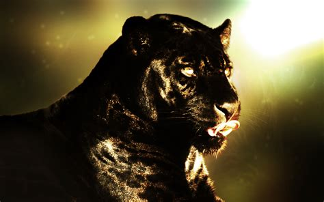 wallpaper black panther 99 black panther hd wallpapers background images