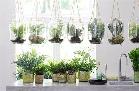 cuidados de las plantas de interior 10 s 250 per consejos para cuidar tus plantas de interior y