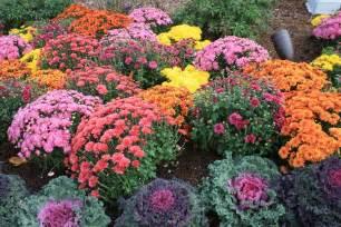 mums flowers mums