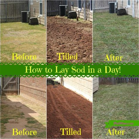how to your to lay top 28 when to lay sod why sod your lawn lsu agcenter how to lay sod paperblog