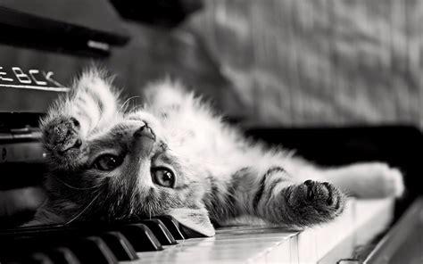 cat wallpaper note 3 piano cat by kamysweet on deviantart