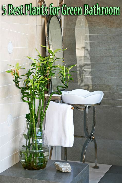 best houseplants for bathrooms 5 best plants for green bathroom quiet corner
