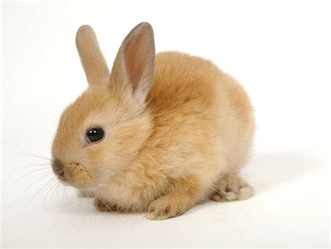 Baby Rabbit Care Tips and Advices   InspirationSeek.com