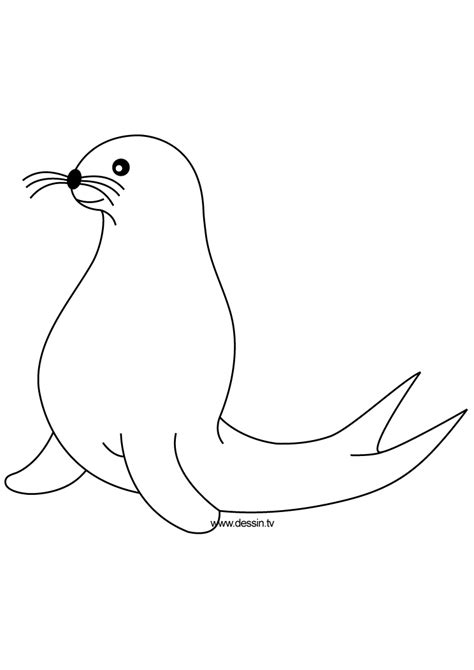 Coloring Seal Seal Coloring Page