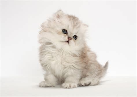Cutest Cats Pet Pet Pet Product 8 by The 11 Cutest Kitten Photos We Ve Seen