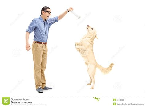 with a bone luring a with a bone stock photo image 41203677