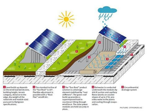 living green roof advantages how living roofs improve solar panel performance green