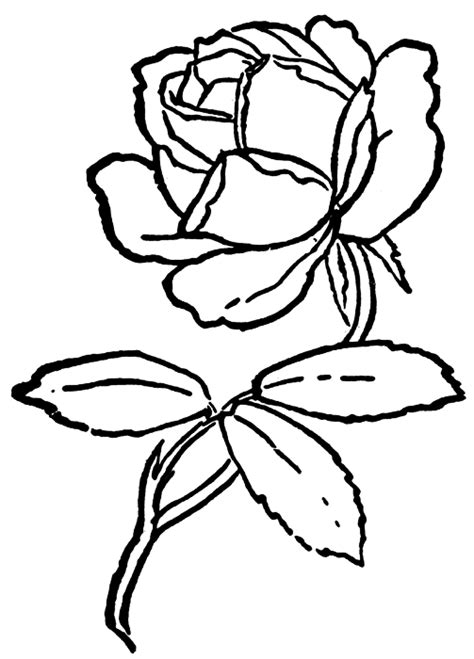 rose coloring pages border rose clip art outline clipart panda free clipart images