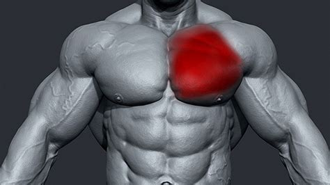 bench press torn pec tip how to avoid a pec tear t nation