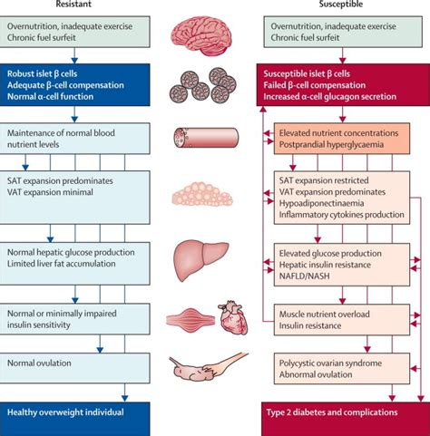Pathophysiology Of Diabetes Type 2 Essay by Endo Diabetes Mcmaster Pa Student Resource