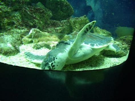 aquarium pyramid swimming tortoise