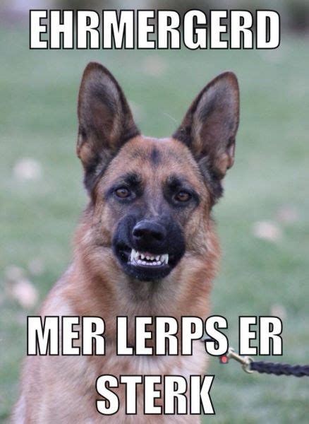 Funny German Shepherd Memes - funny german shepherd dogs meme