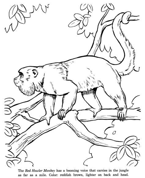 howler monkey coloring page monkey coloring pages