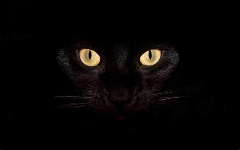 wallpaper black cat hd abstract black cat backgrounds wallpaper high quality