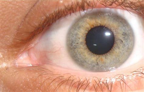imagenes ojos de colores archivo color de ojos jpg wikipedia la enciclopedia libre