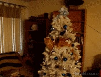 funny cats in christmas trees cats in trees 20 photos of felines heavy