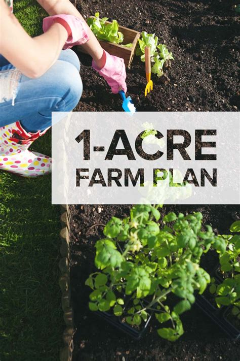 One Acre Homestead   Here's What to Plant, Raise, and Build