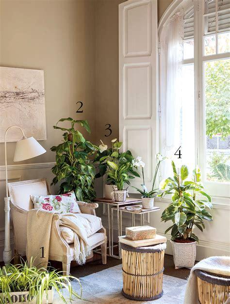 decorar rincon con plantas plantas que duran todo el a 241 o