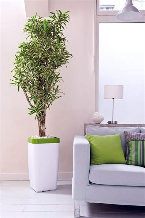 Plants For Living Room India Feng Shui Plants For Harmony And Positive Energy In The