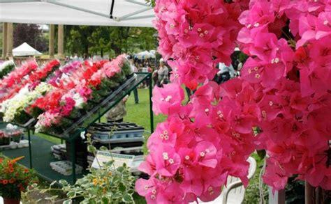 fiera fiori eventi a firenze mostra mercato primaverile di piante e fiori