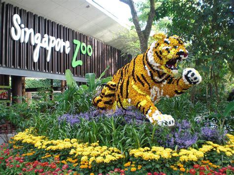 safari singapore new year singapore zoo and safari on the way to somewhere