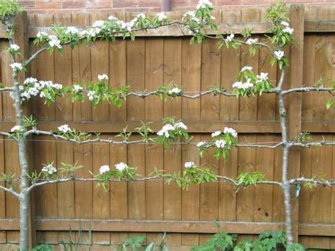 bilder schöne gärten zaun pflanzen idee