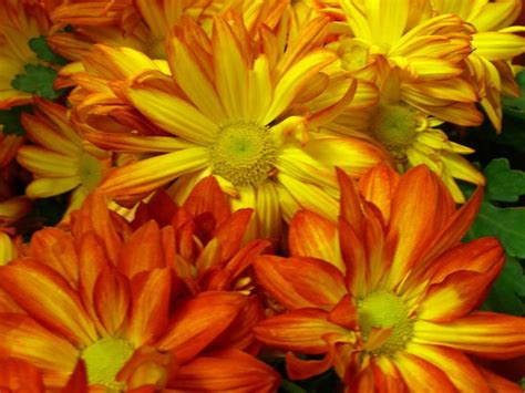 flower fall fall flowers bing images fall scenes pinterest