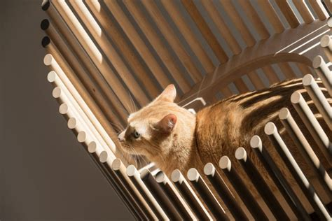 5 stylish modern cat trees for design lovers neko a see through modern cat tree by rinn design milk