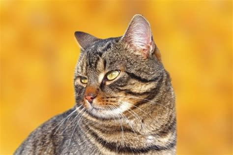 protein 4 pets the senior cat protein a balance pets4homes