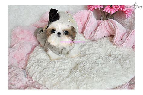 puppyfind shih tzu imperial puppies for sale breeds picture