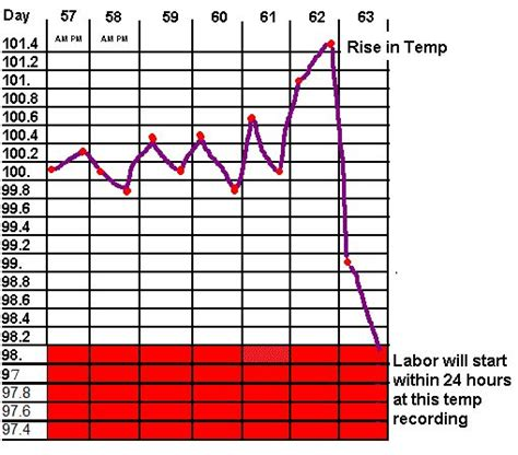normal puppy temperature what is a normal temperature for a puppy powerpointban web fc2