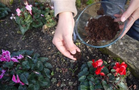 Coffee Grounds For Gardening by 15 Gardening Hacks That Will Turn Any Thumb Green Page 21