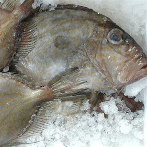cucinare pesce san pietro tataki di pesce san pietro con quinoa e uova di salmone
