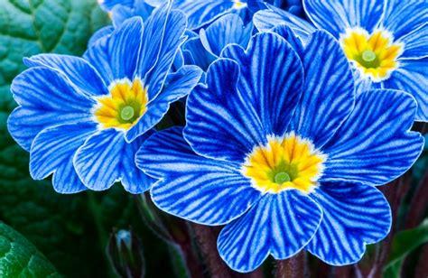 fiore portafortuna 6 fiori portafortuna per capodanno foto pollicegreen